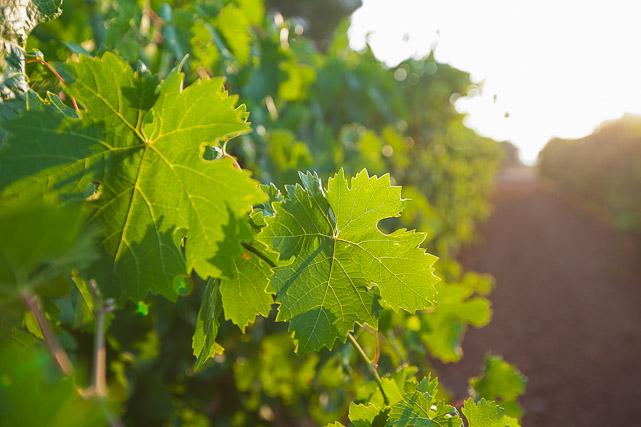 Fotografía del vino y bodegas-Valencia